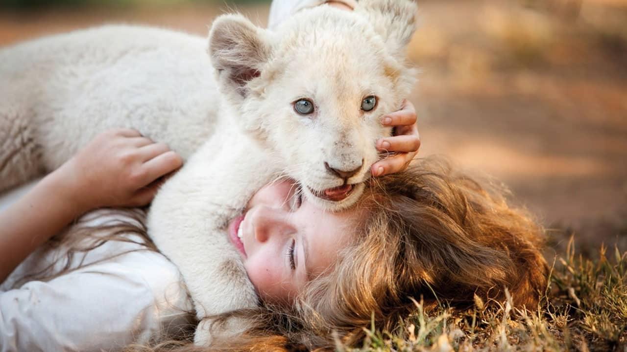mia e il leone bianco intervista gilles de maistre zerkalo spettacolo