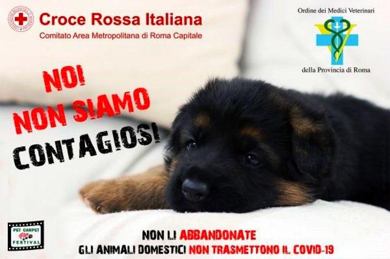 #Noinonsiamocontagiosi, l'appello dei Vip contro l'abbandono degli animali per il coronavirus