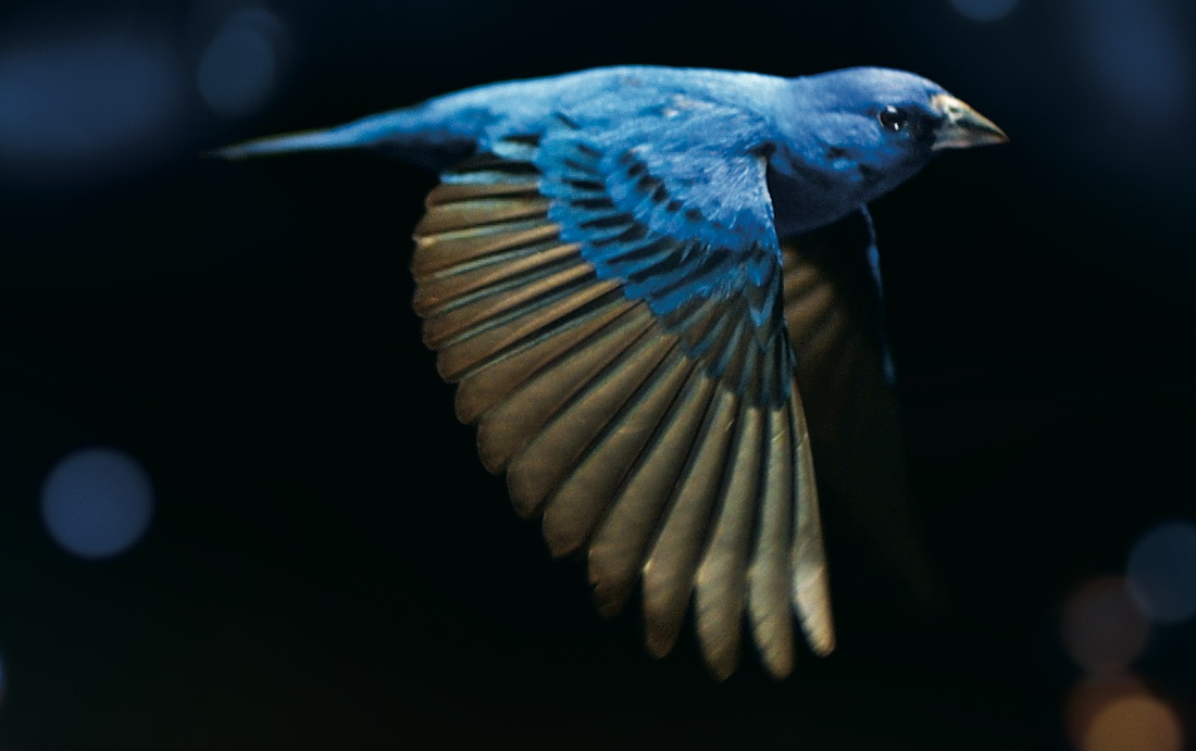 Movies for Nature, la rassegna cinematografica online per la Giornata mondiale dell'Ambiente zerkalo spettacolo
